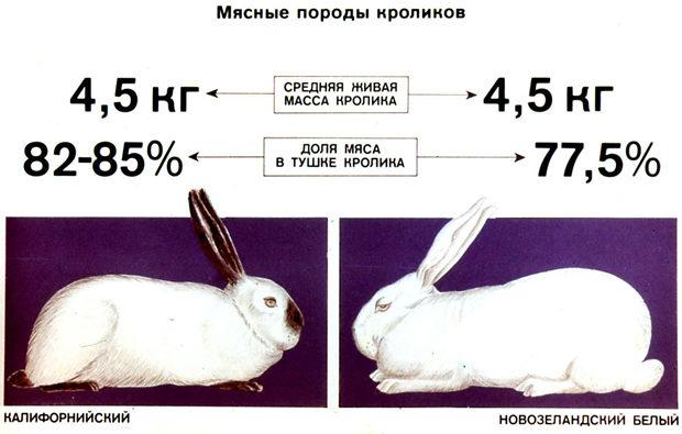 Мясные породы кролей