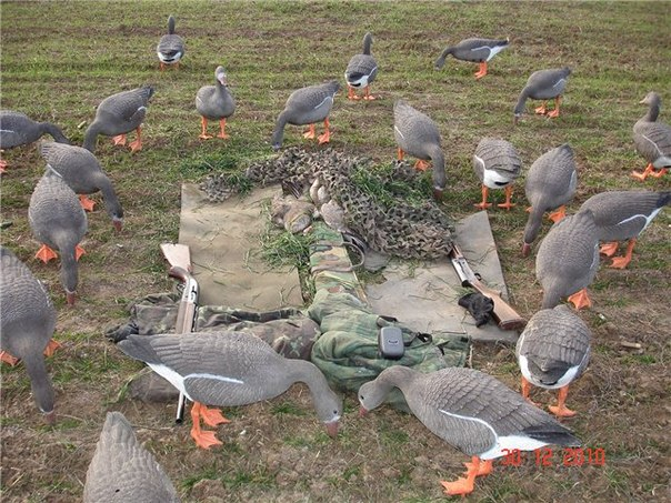 Скрытая засидка охотника