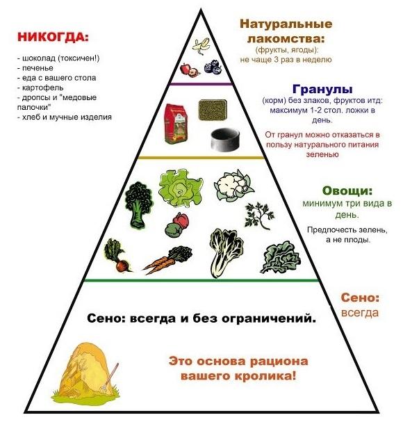 Пирамида питания кроликов в домашних условиях