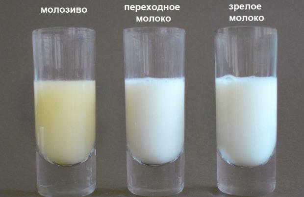 Разница между молозивом и молоком