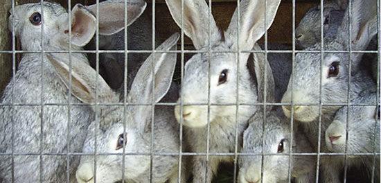 Разведение кролей - выгодный бизнес