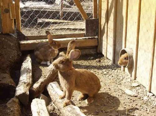 Небольшой вольер для кроликов