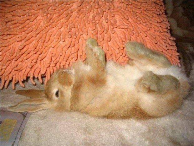 Листериоз у кролей - неожиданная гибель