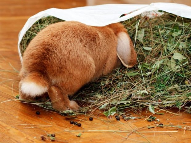 Сухой корм для кролика