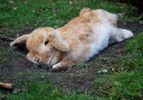 Больной кролик вялый и взъерошенный