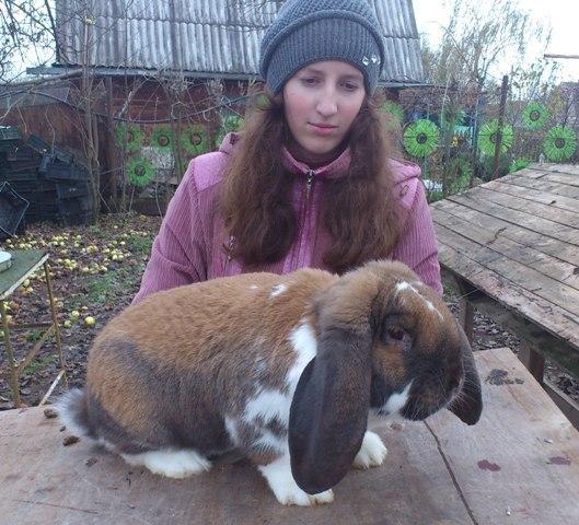 Кролик французский баран до 5 кг