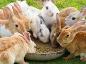 Кролики на комбикорме хорошо растут
