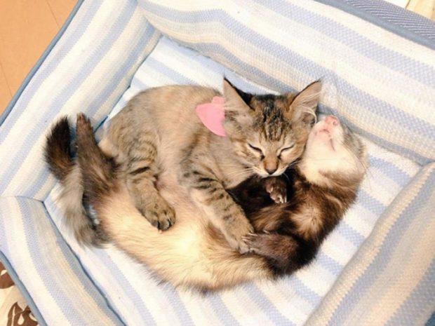 Лучшие друзья - хорьки дружны с домашними животными
