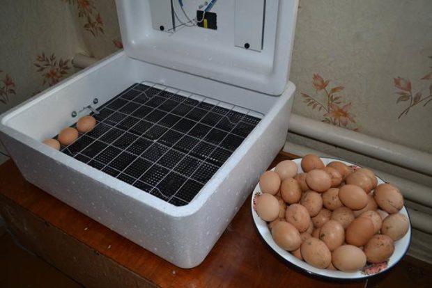Модель ИБ1НБ на 35 куриных яиц