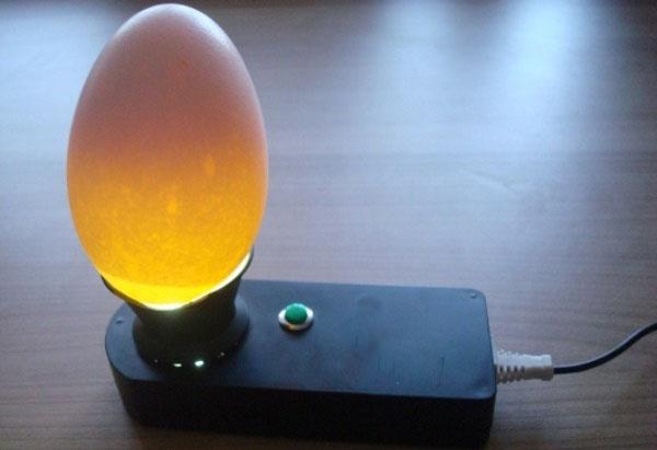 Проверка яйца овоскопом