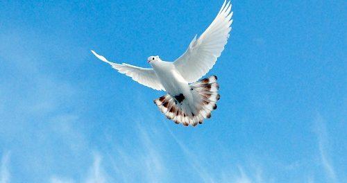 Бакинский бойный в полете