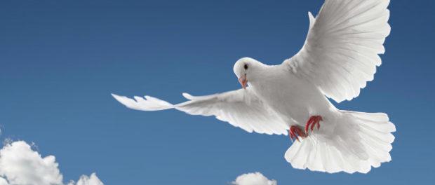 Белый голубь - символ мира и чистоты