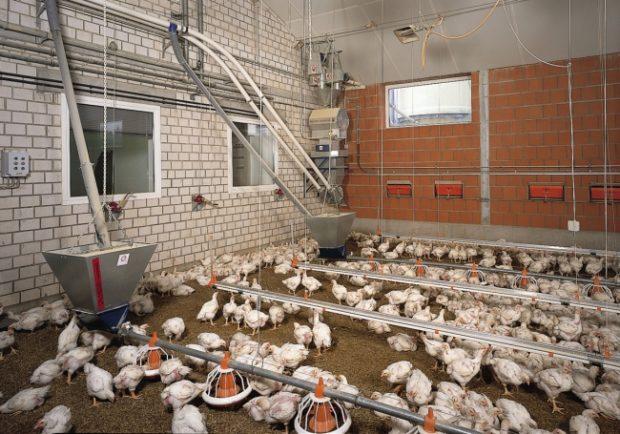 Бройлерная ферма с подстилочным содержанием