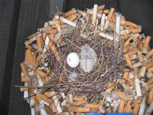 Гнездо городского голубя - из подручных средств