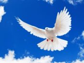 В мире более 2000 пород разных голубей