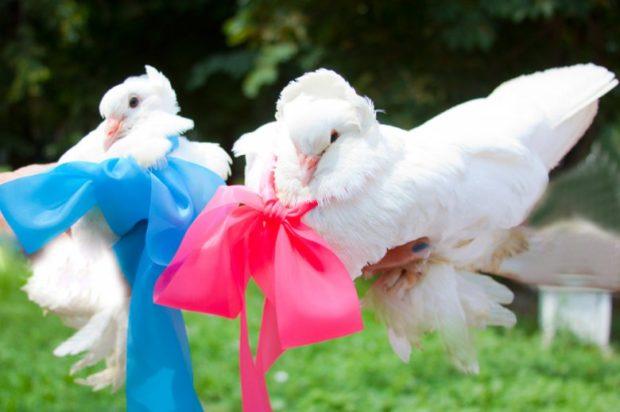 Ленточки на белых голубях