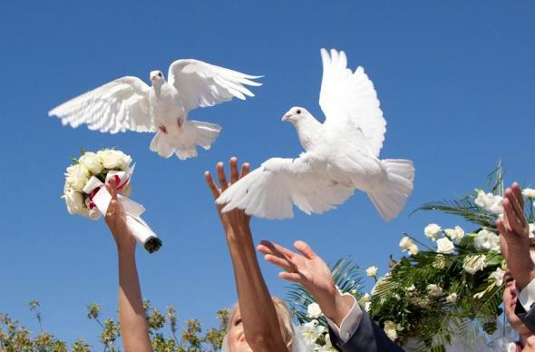 Выпускание голубей на свадьбе