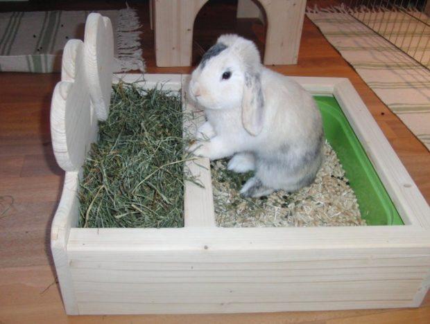 Лоток для кролика позволяет содержать все в чистоте
