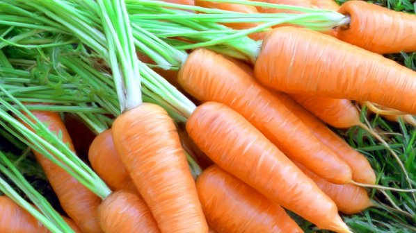 Морковь для коров - источник витаминов и клетчатки