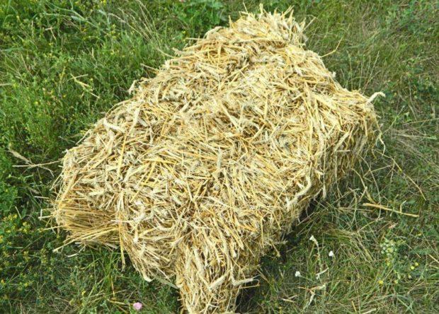 Солома для коров - не более 2 кг в день