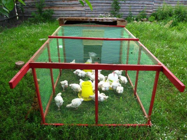 Клетка для клуши с цыплятами своими руками 36