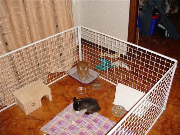 Вольера для кролей дает свободу передвижения