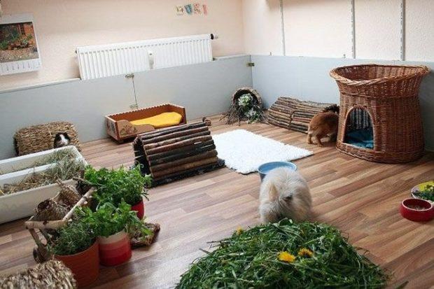 Выделенная комната для разведения декоративных кролей