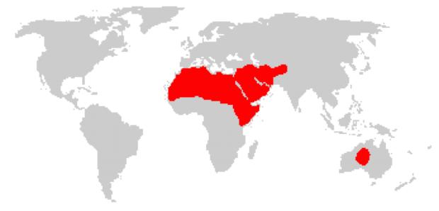 Ареал обитания одногорбых верблюдов