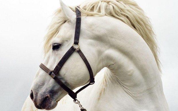 Голова и шея лошади