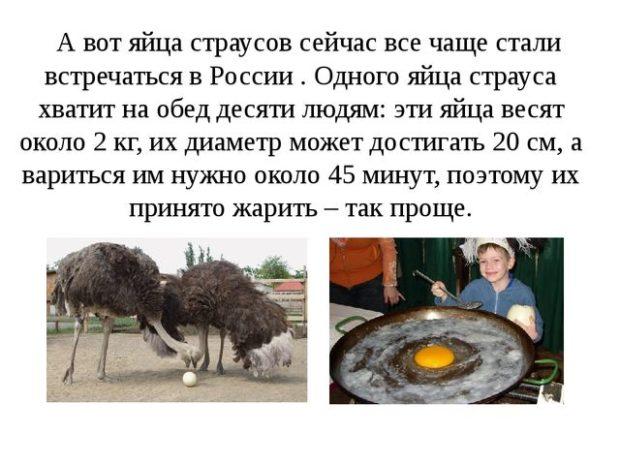 Яйца страусов - факты