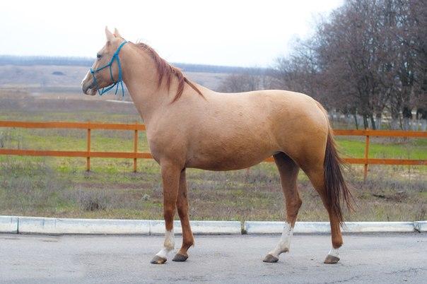 Лошадь - непарнокопытное животное