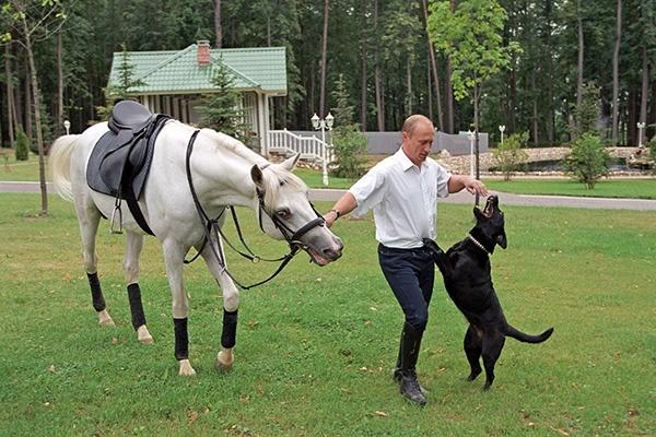 Лошадь в подарок Путину