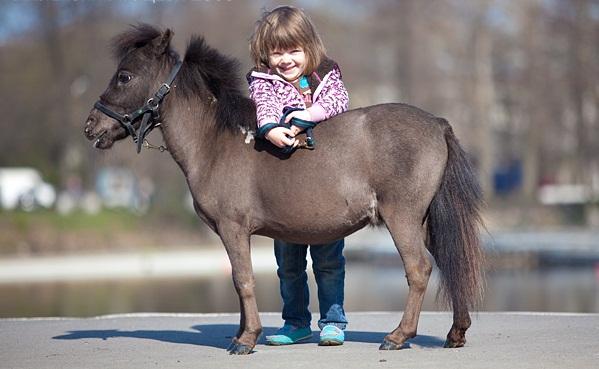 Лошадка фалабелл - не больше 50 см ростом