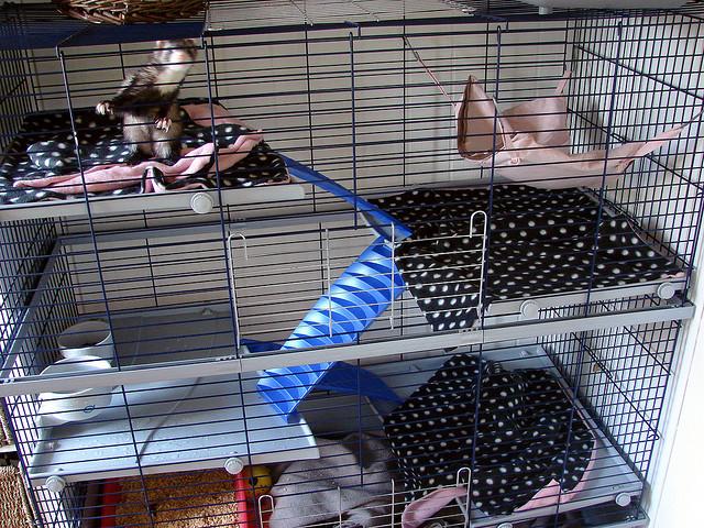 Как самому сделать клетку для крысы 37