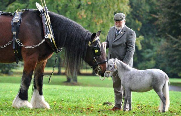 Пони и лошадь - сравнение