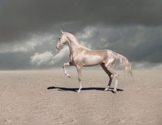 Самая красивая лошадь мира изабеловой масти