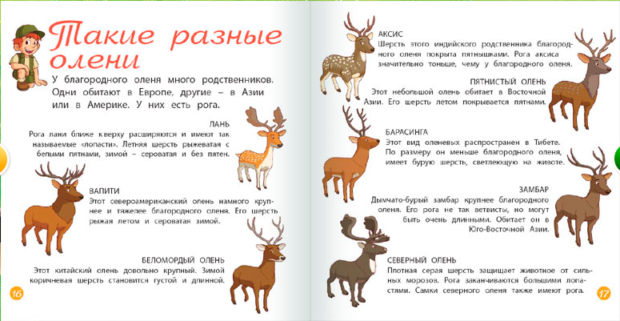 Некоторые виды оленей