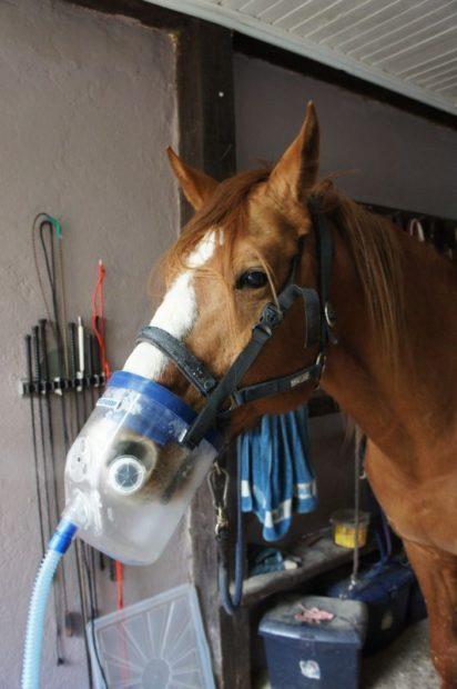 Ингаляция при астме лошади