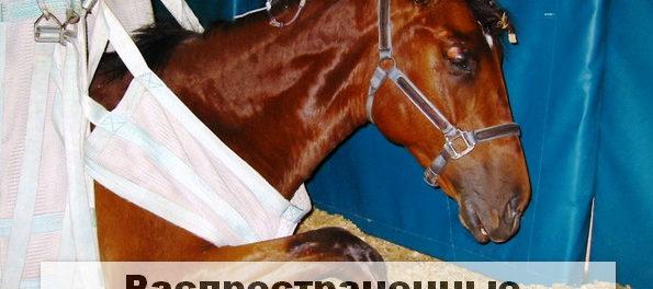 Болезни лошадей часто приводят к гибеои