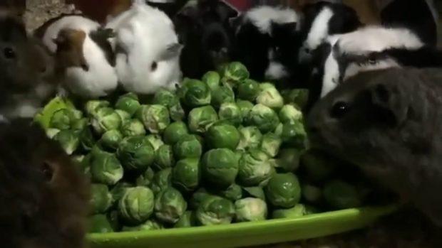 Брюссельская капуста вызывает понос