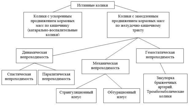 Классификация колик у лошадей