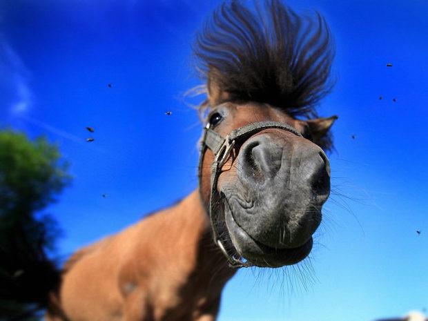Конь по кличке Жук-рогач очень смешной
