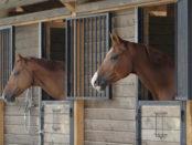 Кони в отсеках конюшни