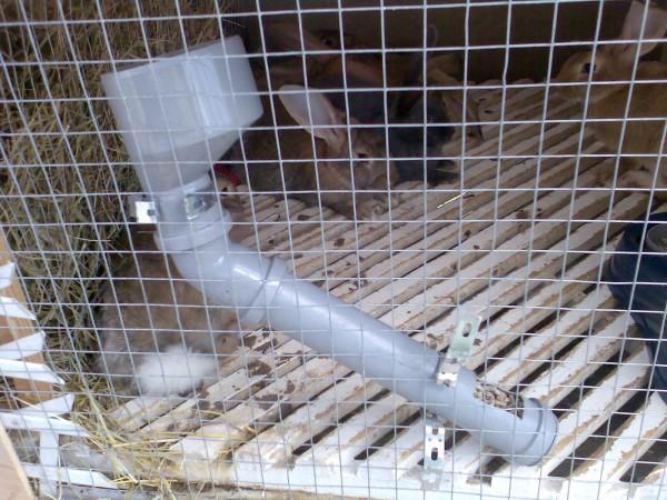 Кормушки для кроликов своими руками их