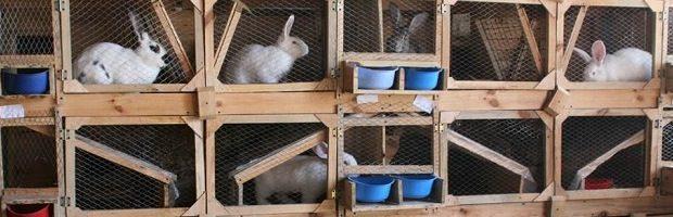 Клетки для кроликов по конструкции Золотухина