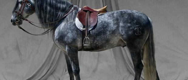 Конь в спортивной амуниции