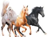 Масти лошадей: серая, рыжая, вороная