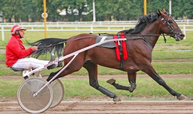 Тренировка рысистых лошадей