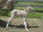 Новорожденный жеребец - как назвать существуют правила