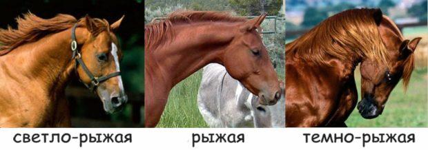 Оттенки рыжей масти лошадей
